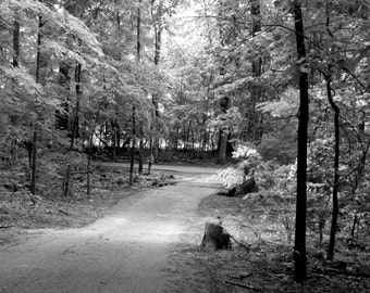On the Morgan Trail, Fine Art Photography, Landscape, Black and White Photography, Nature Photograph