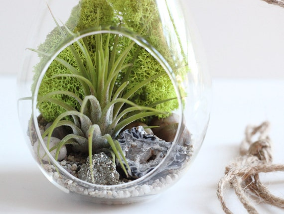 Geode and Pyrite Hanging Air Plant Terrarium Kit || Teardrop