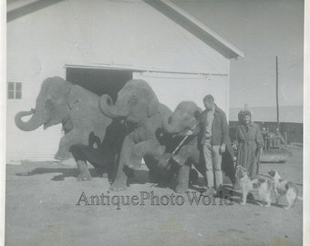 Circus animal trainer w elephants dogs vintage photo