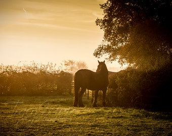 "Horse Photography -  ""Shire Silhouette"" - horse wall art - home decor - fine art photography - CHOOSE SIZE"