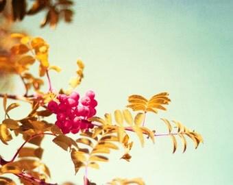 Photography Fine Art Print, Mint & Yellow Tree Wall Art, Nature Home Decor Print- Summers Mint