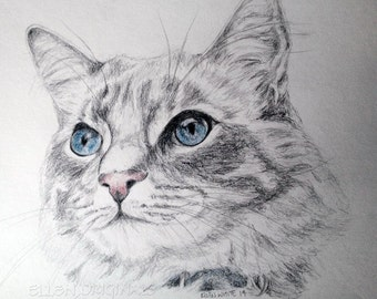Graphite and colored pencil cat drawing.