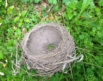 BIRD'S NEST for NATURE-lovers