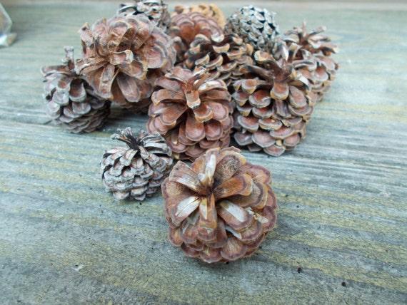 Small pine cones for rustic decor diy crafts pine cone for Small pine cone crafts