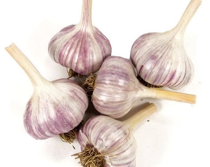 Metechi Garlic Bulbs Organic Grown Gourmet - 1/2 Pounds For Fall Planting or Cooking Fall Shipping Non-GMO