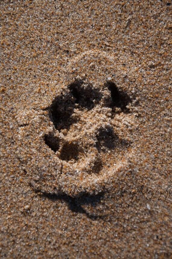 pawprints photography, dogs, beach photography, beach home decor, wall art, nursery art, best friends, beach wall art