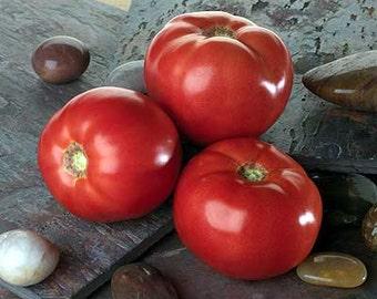 Organically Grown, non-GMO, Heirloom Bella Rose Tomato Seeds