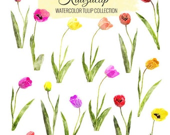 Watercolor Tulip Collection - Commercial and Personal Use