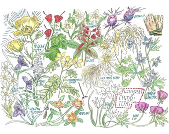 """Wildflowers of Central Texas- Art print 8.5""""x11"""""""