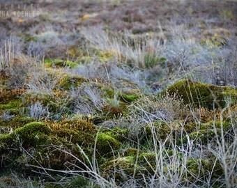 MOOR photography print,  Scotland fairy moss art, 8x12