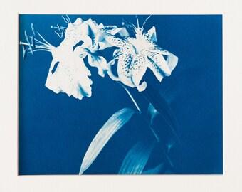 Blauwdruk oftewel cyanotype bloemen
