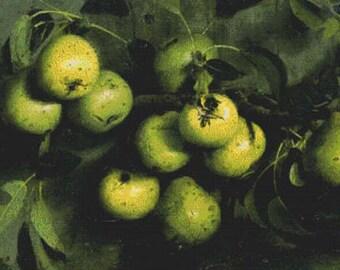 Bough of Pears with Yellow Jacket PDF Cross Stitch Pattern