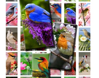 Birds and Flowers Bloom Blossom Spring Summer Song Digital Images Collage Sheet 1x2 inch Rectangles Domino Commercial INSTANT Download RD54