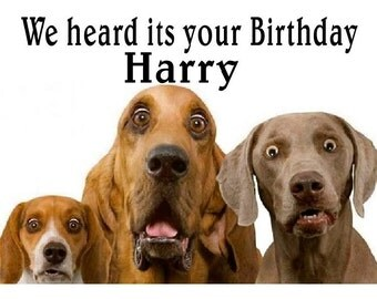 funny cute Surprised dogs birthday Card  Personalised funny