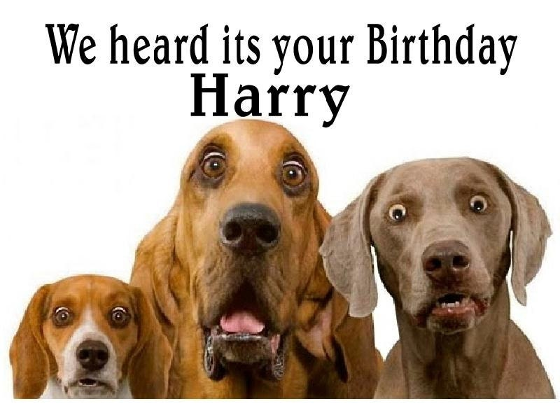 funny cute Surprised dogs birthday Card Personalised funny – Dog Birthday Card