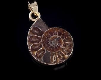 Amonite Shell & Brass Pendant
