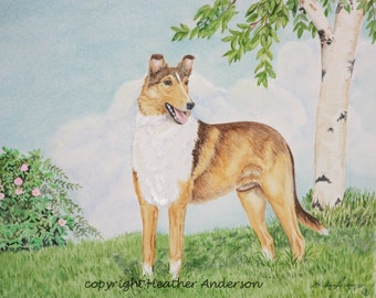 """8x10 Giclee print, Sable Smooth Collie, """"Keeping a Watchful Eye"""", Hand Drawn Collie Art, Dog Art, DOG LOVER GIFT, by Heather Anderson"""