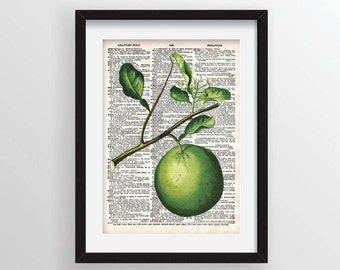 Lime Botanical Illustration on Vintage Dictionary Page