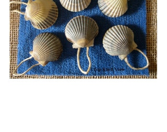 "NANTUCKET SCALLOP SHELL Ornaments - Set of 6 {Shells are approximately 2"" in size}       Gloss Finish            Great as a Gift Item!"