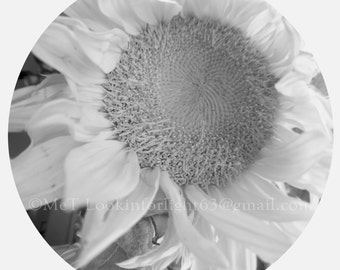 SunFlower Photo, Black white Art, circle floral photo, Flower art, Happy Sunflower, Instant Download, Digital Download file, JPEG file
