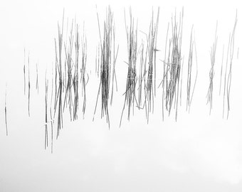 Black and White Reeds Reflection