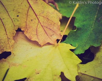 Fall Leaves Close Up, 11x14 matted photo, Fine Art, Macro Photography