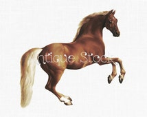 Horse Digital Download Image - Brown Horse Illustration - PNG and JPG for Scrapbooking, Transfers, Collages...