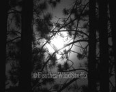 Super Full Moon Photography | Night Photo Art | Bright Moon Through Pines | Darkness | Spooky Trees | Night | Northern Michigan |  Print