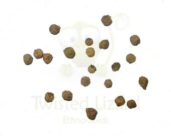 Green Peppercorn Seeds - 15 Seeds