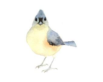 Watercolor Bird - Titmouse - Fine Art Print