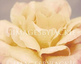 Pink Rose Fine Art Photography 8x10 Digital Download
