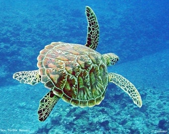 Sea Turtle Aluminum Print -Nautical Home Decor- Photographed in Hawaii- Available in a variety of sizes - Ready to hang