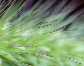 Fine Art Photography, Macro Photography, Abstract Art, Nature Photography, 5 x 7 Print, Dreamy, Weed, Green, Purple