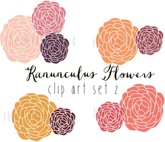 Ranunculus Flower Clip Art Vector And Png Modern Flower