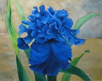 Blue Ruffled Iris....Original Watercolor Painting