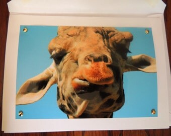 Set of 5 Giraffe photo cards (12.50 USD/set); simply bound in a protective sleeve, as I like to avoid excessive packaging.