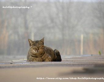 Simon Sees~ **Art**Feline**Unedited**Wall Art* *Office Art**Photography**Print**  **Decor**Design**Photographic Art** *Cat*Kitty*Watcher*