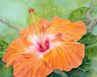 Orange Hibiscus Painting Print