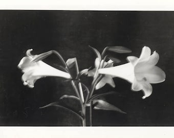 vintage photo 1940 Lilly Lillies Arty FLoral EASter