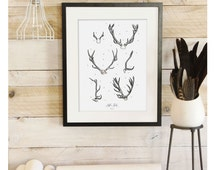 Antler Study Vol.2- Scientific illustration. Beautifully textured cotton canvas art print. Order as an 8x10 11x14 or 16x20 size.