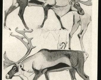 Vintage Reindeer postcard, Vintage postcard V. Vatagin  Reindeer, Rangifer tarandus, reindeer illustration postcard