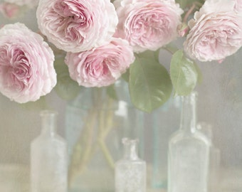 Rose Photography, Fine Art Photograph, English Roses, Romantic Decor, Large Wall Decor
