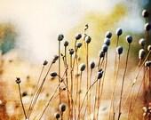 Nature Art Print - rustic woodland photography - wall art - indigo blue, harvest gold, botanical photograph, home and garden, earth tones
