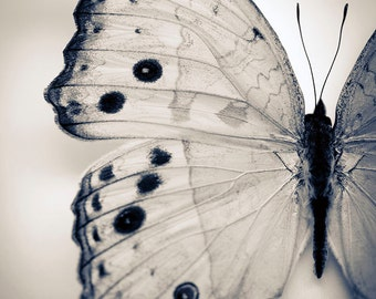 Black and White Nature Photography, Butterfly Wall Art- Garden, Minimal Home Decor,  Wings