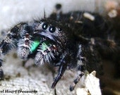 """5x7 Nature Inspired Single Photo Greeting Card or Print--Enjoy Your Birthday--""""Hello Spider!""""--#25"""