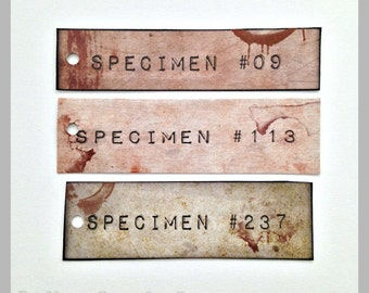 Specimen Tags - Set of 12