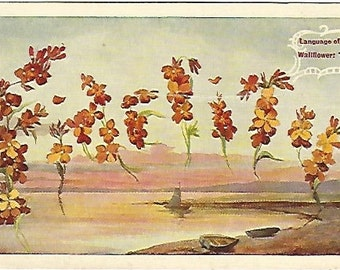 Fidelity Wallflower Flowers Language of Flowers Vintage Postcard over 100 Years Old! 1909
