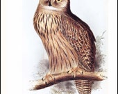 """Owl Art Print, Bird Print """"Bubo Maximus, Largest Owl in the World"""" --- Vintage Bird Wall Hanging, Home Decor to Frame  No. 109"""