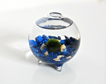 Marimo Ball in a Bubble / Moss Ball Ecosphere, Glass Globe Aquarium, Blown Glass Orb Aquarium, Japenese Home Decor, Glass Sphere Aquarium