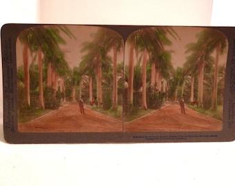 Hawaiian Stereoscope Honolulu Hawaii Vintage 1900s Antique Stereoview Royal Palms Works Underwood Stereoscope Color Photo tiki Hawaiian